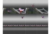 Колибри BELANI