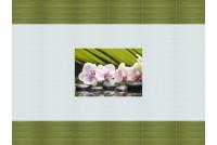 Орхидея BELANI