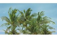 Ceradim Dec Palm Panno A
