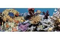 Ocean Reef 2 Декор