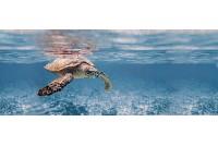 Ocean Turtle Декор