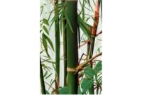 Бамбук GC 304503-01-1 Декор стекло