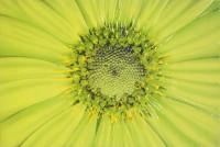 Sun Flower JK45082H2A декор