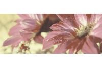 Сиерра 3С тип 1 панно Цветы