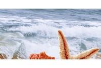 Дали декор песочный В тип 1 07-00-5-08-10-23-251