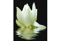 City White Lilies Панно (3 шт.)