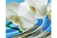 Water Garden А Панно (2пл)