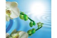 Water Garden В Панно (2пл)