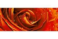 Royal Syntia Rose 1 Декор