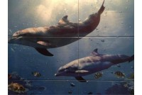 Dolfins LATINA