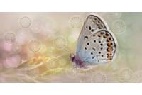 Мечта вставка Бабочка 08-05-23-371-1
