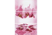 Орхидея  Валентто/Valentto