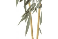 Бамбук ВС7БМ004