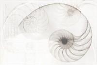 Nautilus ракушка (из 2 шт.) многоцветный панно NT2F453DT