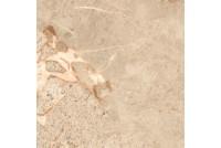 Queen beige QN4R012D