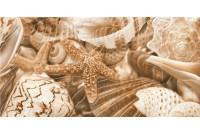Sea Breeze Shells бежевый декор Е11411