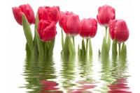 Фреш панно Тюльпаны (из 6-ти частей)