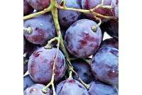 Толедо декор фиолетовый Виноград 14-00-55-140-5
