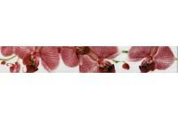 Fiori Бордюр орхидея 267081